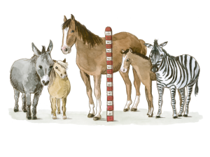 Pferdegrößen